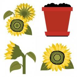 Sunflowers - GS