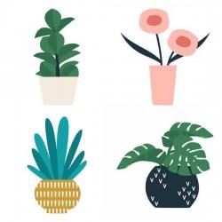 Panorama - Plants - GS