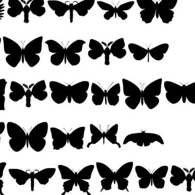 DB Butterflies - DB
