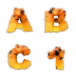 Feline - AL