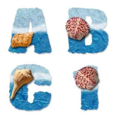Seashells - AL