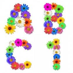 Wildflowers - AL