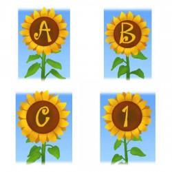 Sunflower Fields - AL