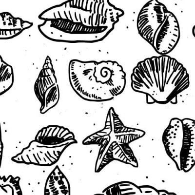 DB Seashells - DB